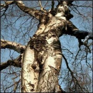 body-tree-cross