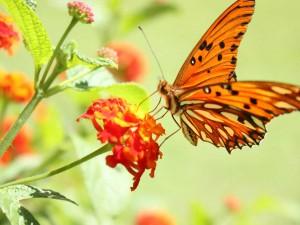 farfalla-su-fiore