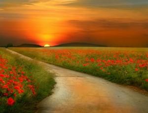papaveri e tramonto
