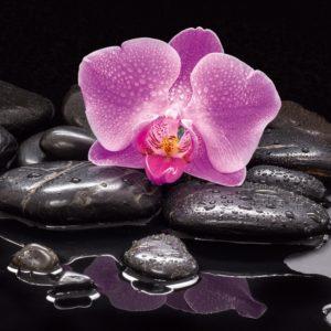 orchidea de sasso